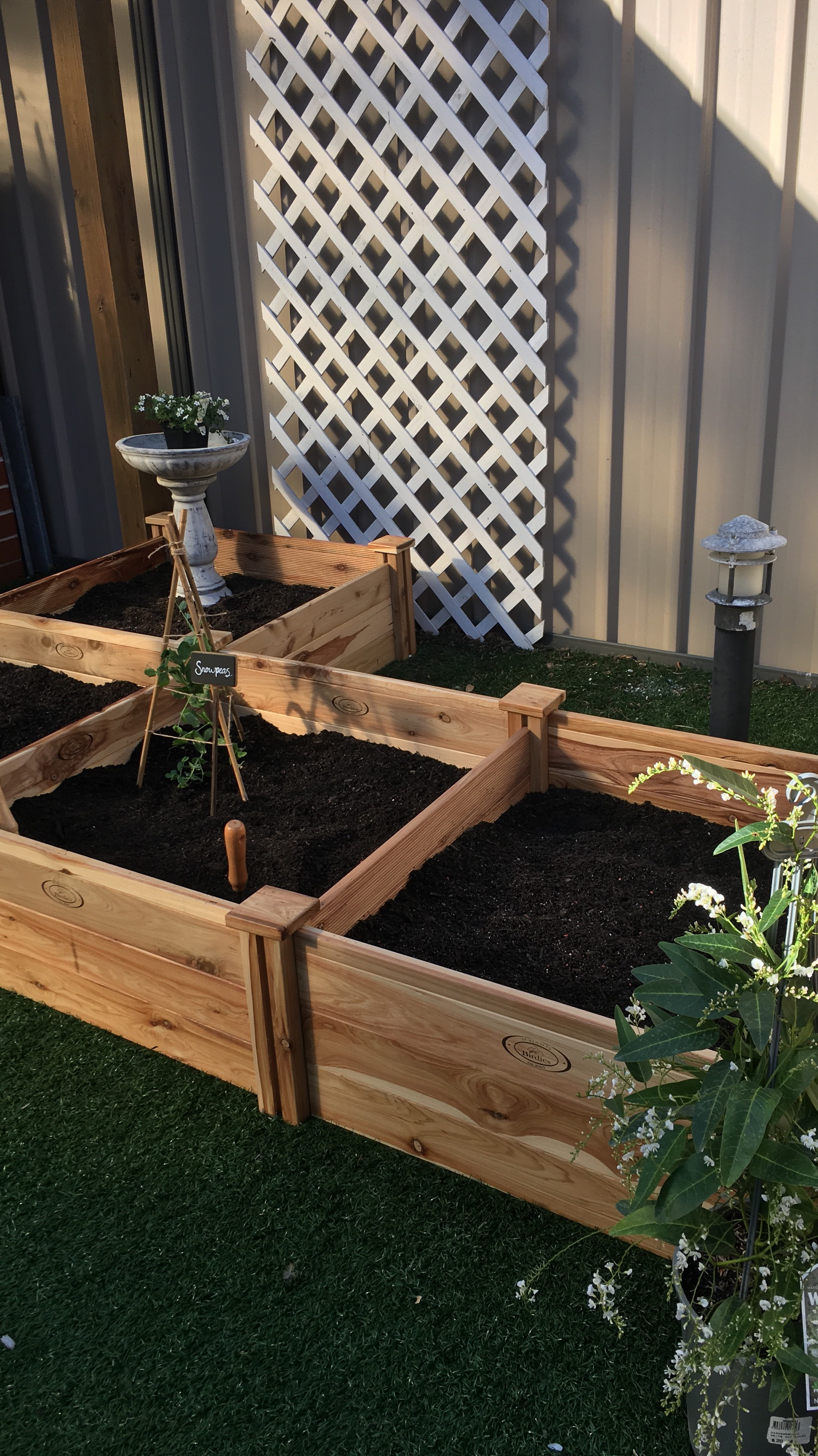 how we started our garden u2013 amira u0027s lifestyle guide